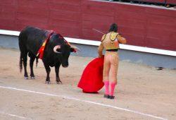 Tourada em Madri, coragem ou covardia?