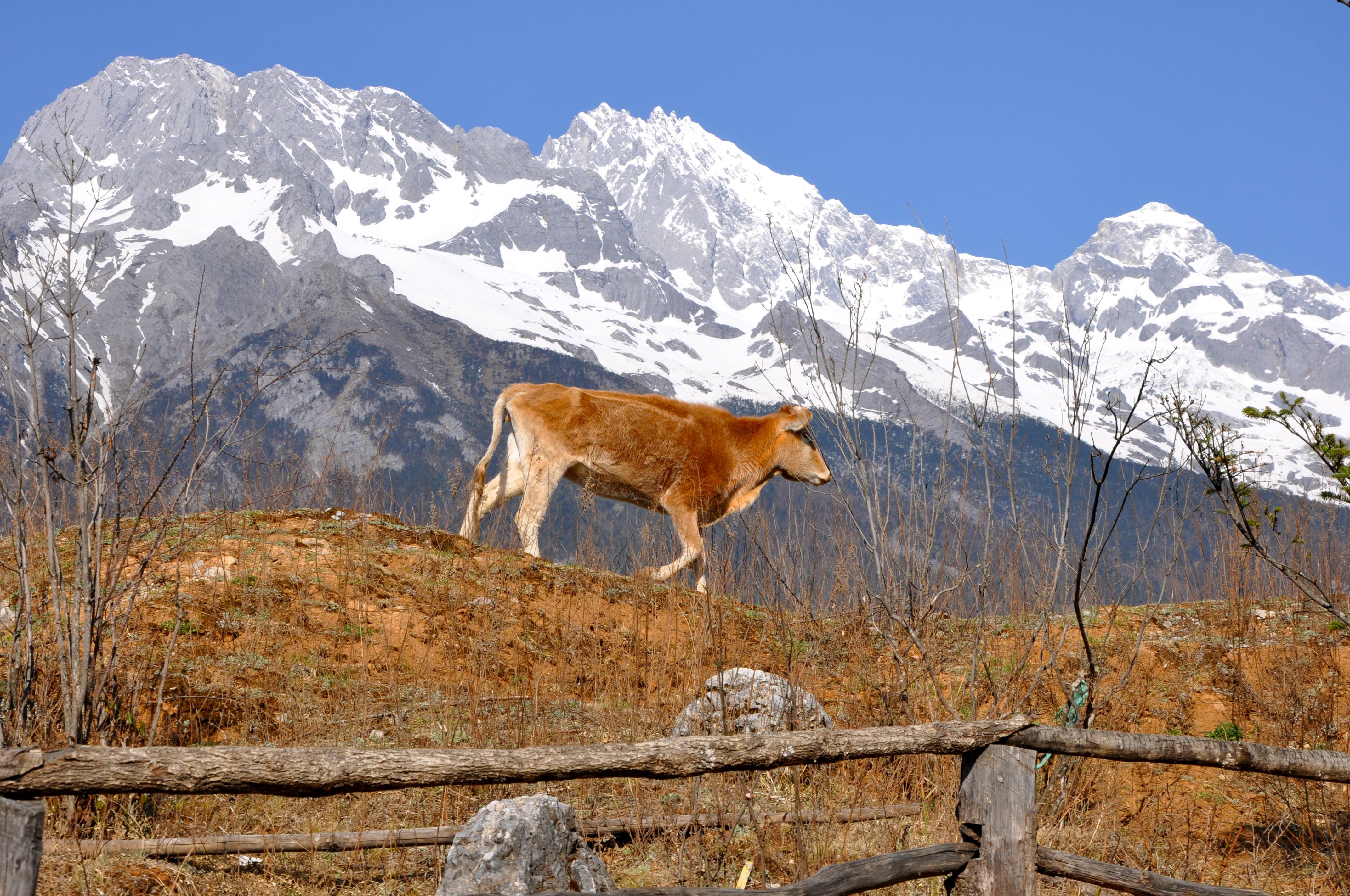 Lijiang e as Montanhas Nevadas do Tigre de Jade