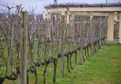 Vale dos Vinhedos, os vinhos brasileiros cada vez melhores