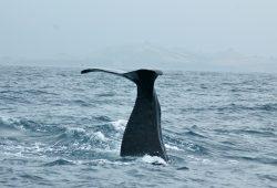 Os cachalotes de Kaikoura