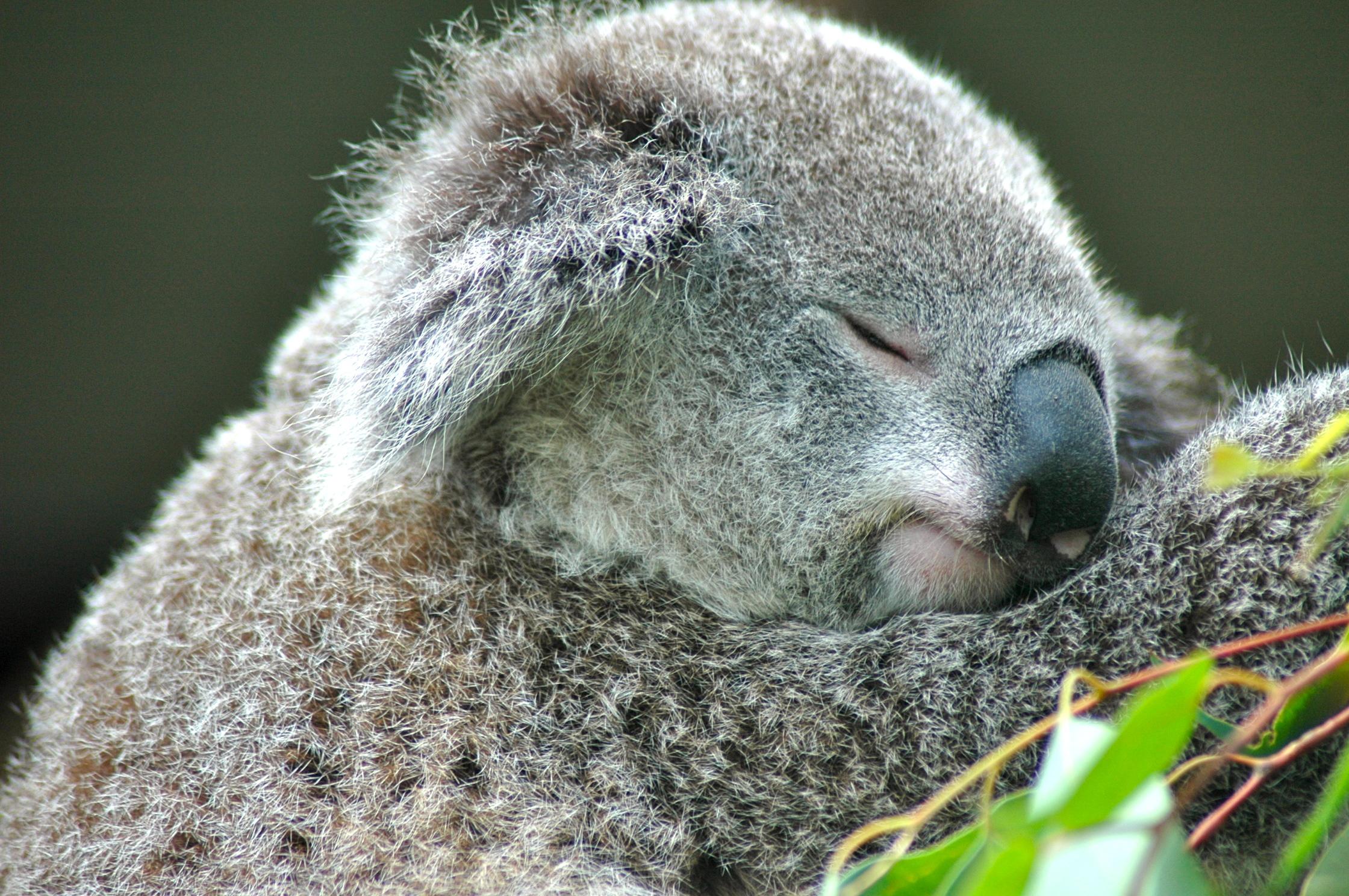 Austrália, a terra dos coalas e cangurus