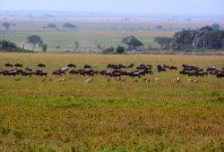 A Reserva Masai Mara e a Grande Migração