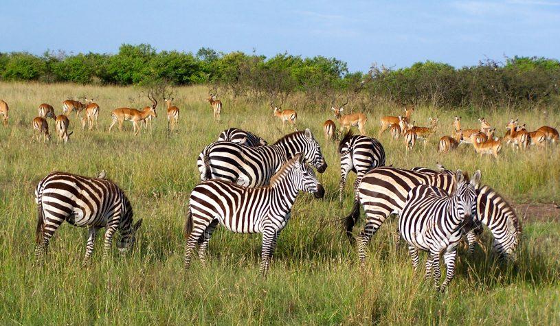 Chegando ao Quênia