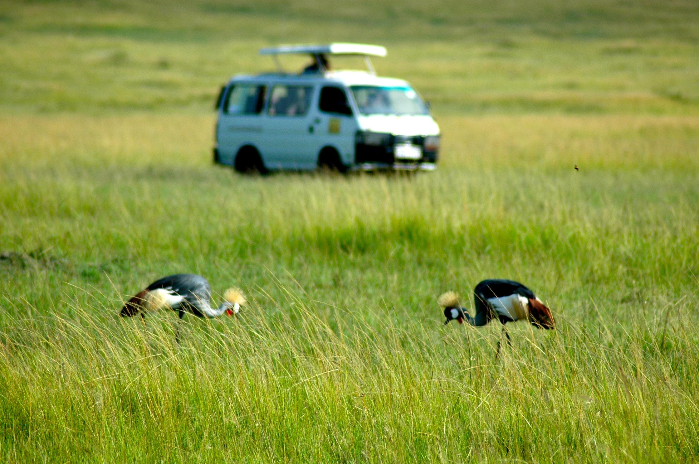 O primeiro safari fotográfico no Quênia