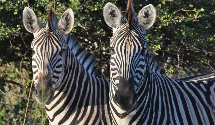 Botswana, um paraíso da vida selvagem