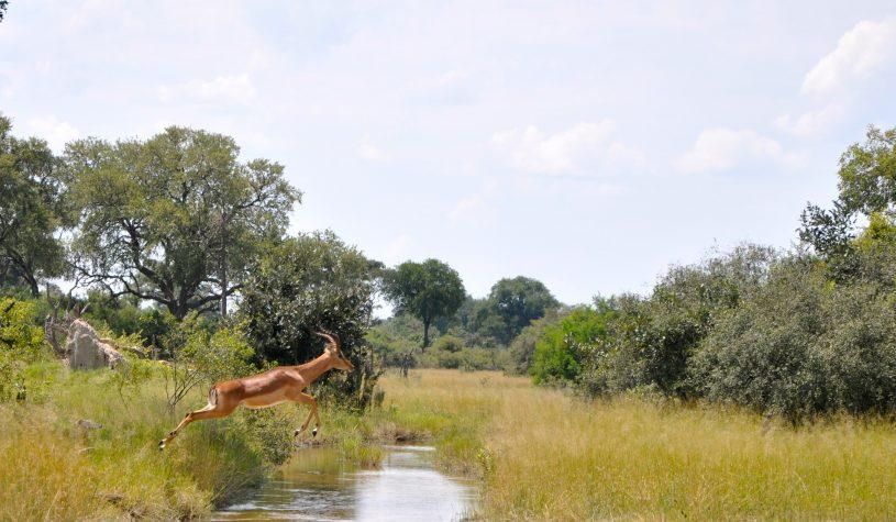 Little Vumbura, o coração do Delta do Okavango