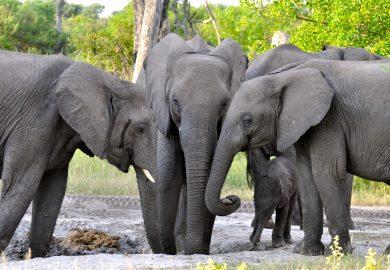 O acampamento Little Vumbura em Botswana