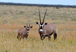 O Etocha National Park, na Namíbia