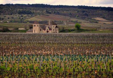 A Costa de Ouro e os vinhos da Borgonha