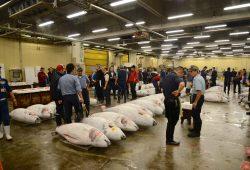 O Mercado de Peixes e o Leilão de Atuns de Tóquio