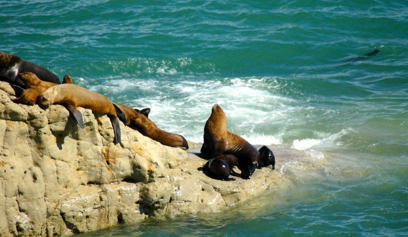 Península Valdés, a dramática vida selvagem na costa da Argentina