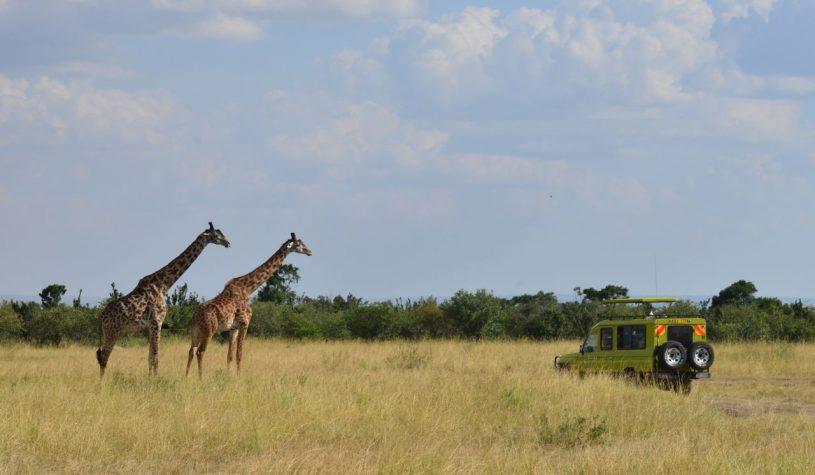 Um Safari nas margens do Rio Mara, no Quênia