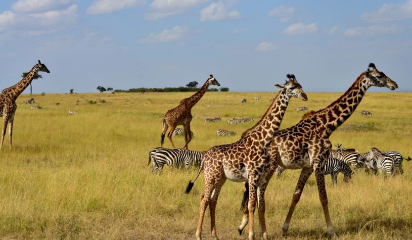 Um Safari perfeito na Reserva Masai Mara, no Quênia