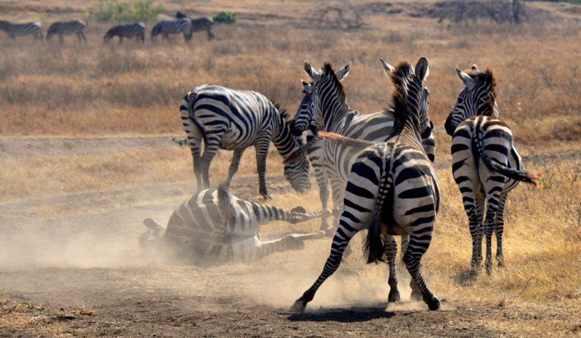 Começando o safari na Cratera do Ngorongoro