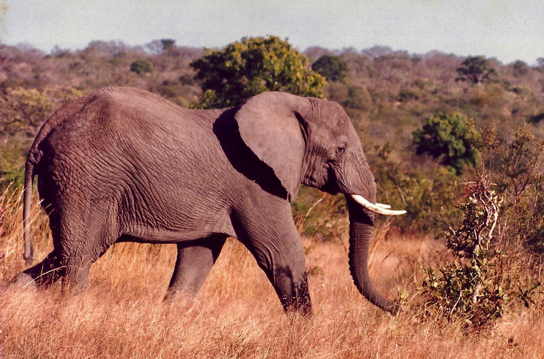 Rumo ao Kruger Park, na África do Sul